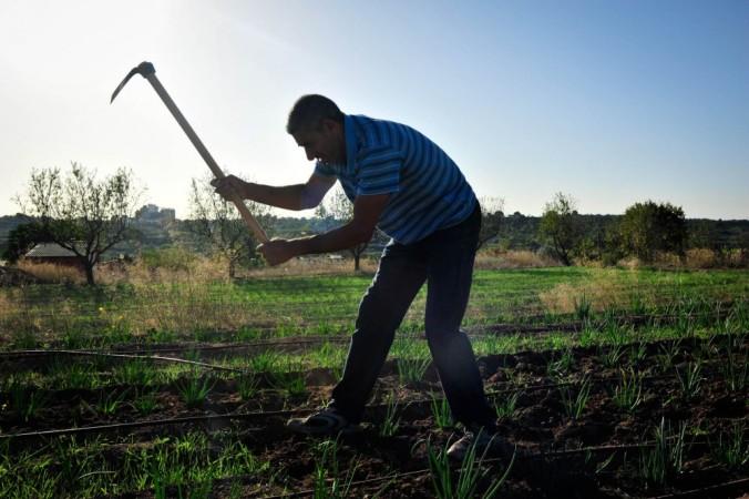 A Valls s'hi ofereix un programa formatiu de capacitació agrícola.